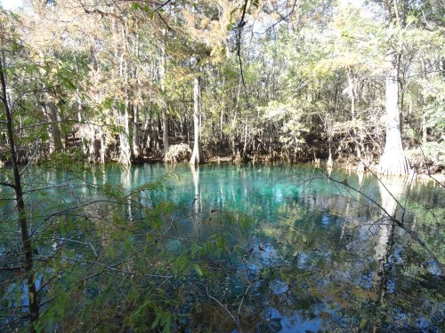 Un bassin d'eau chaude au milieu de la mangrove