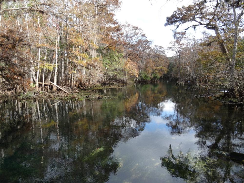 Une étrange forêt aquatique