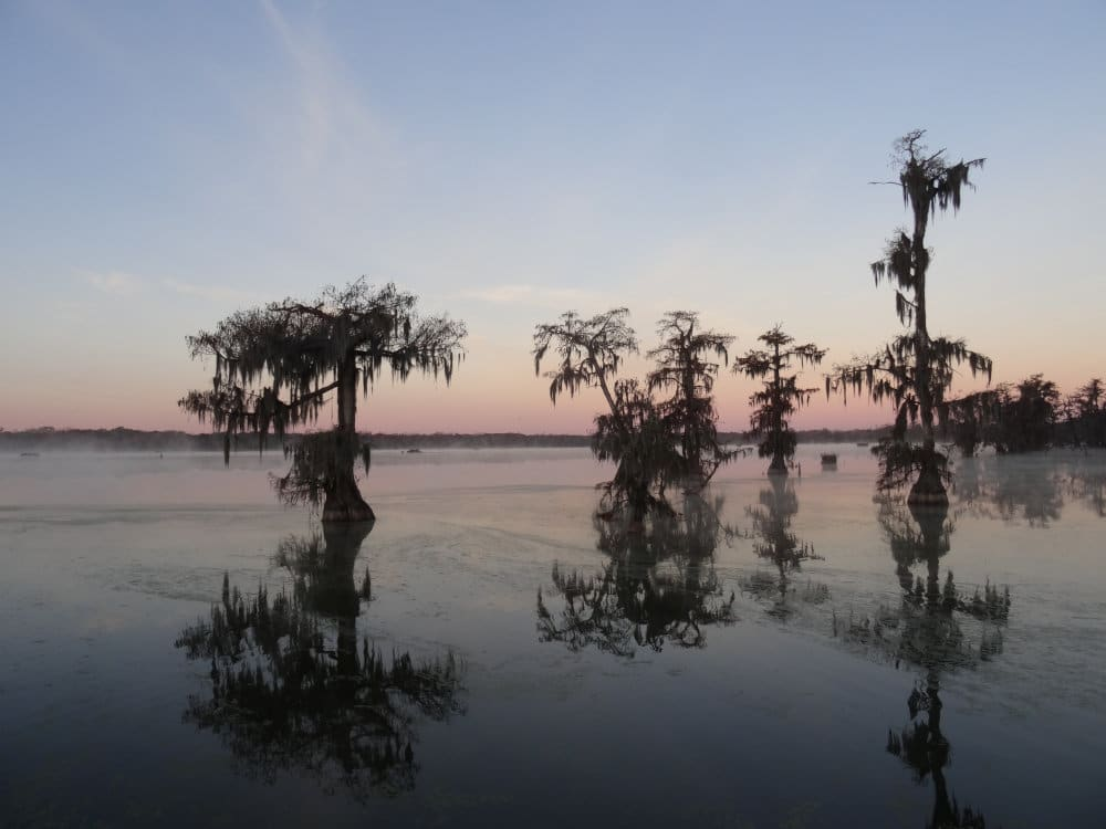 Le Lake Martin en Louisiane
