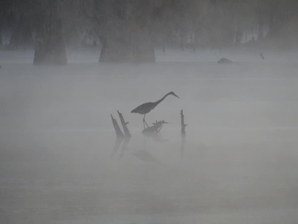 Apparition dans la brume