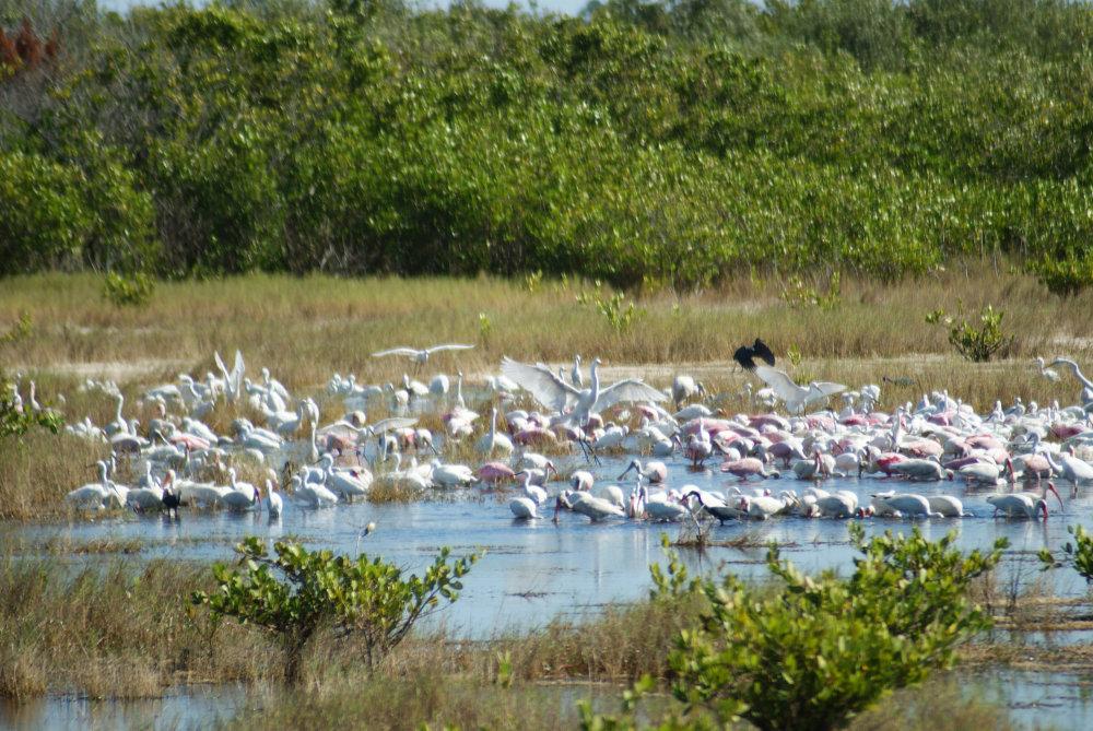 des oiseaux par centaines