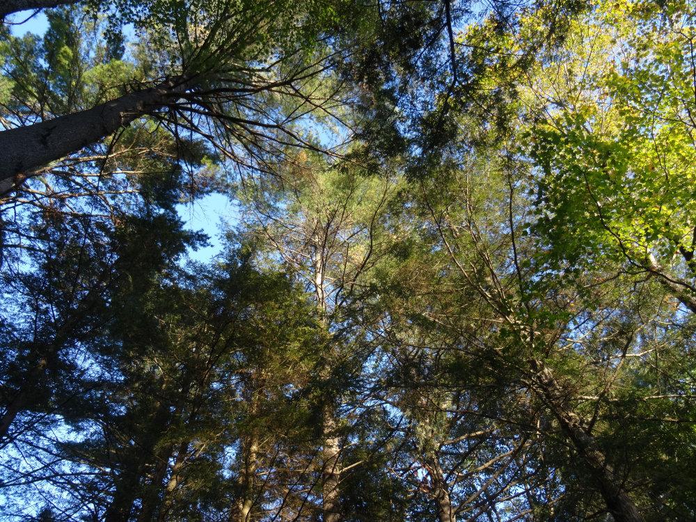 La forêt au coeur du Quechee State Park