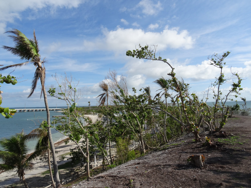 La végétation a bien souffert au Bahia Honda State park