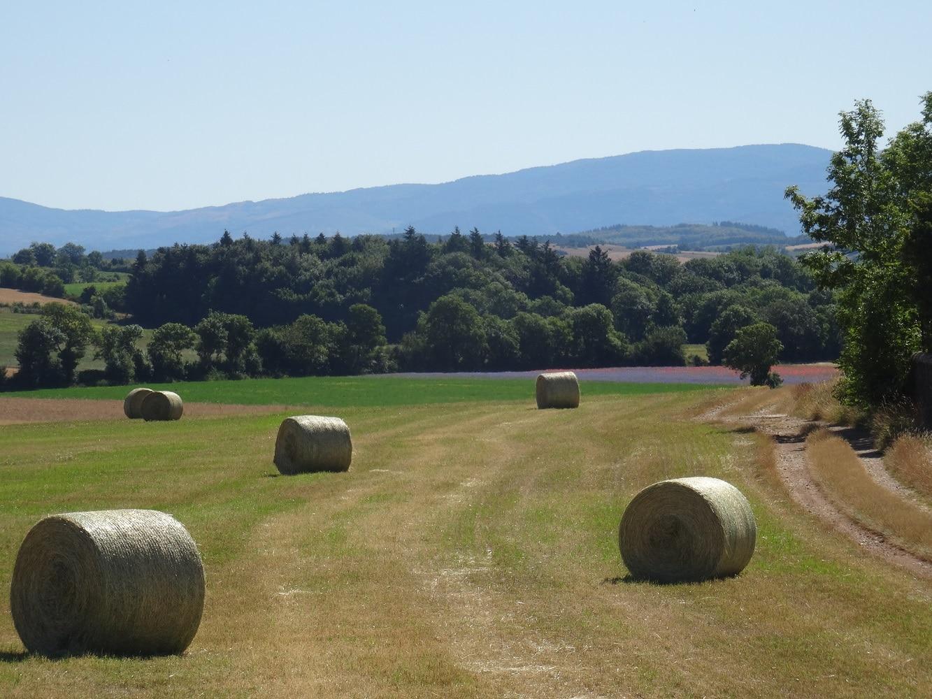 Paysage agricole Sainte Eulalie de Cernon, Aveyron