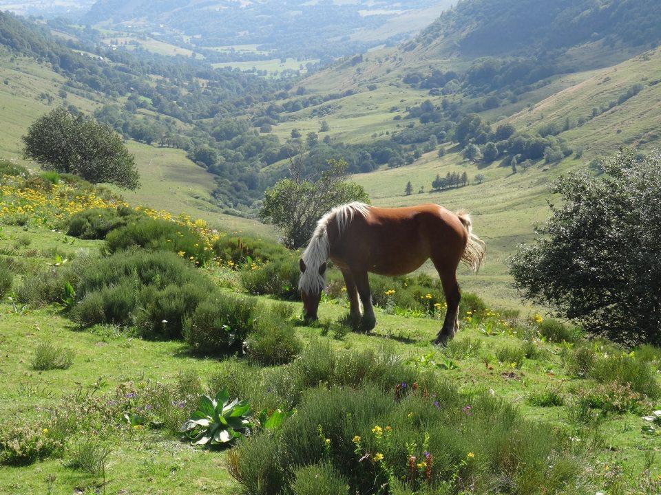 Sur le chemin de rando pour grimper au Puy Mary
