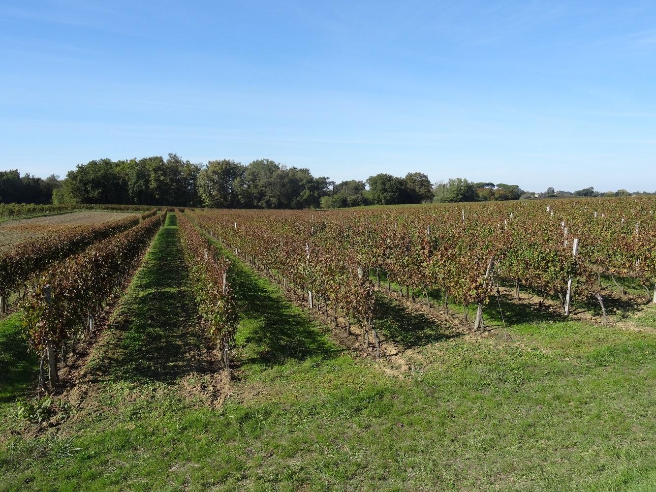 Les vignobles sur la boucle du moulin neuf sur Saint-Quentin-de-Baron
