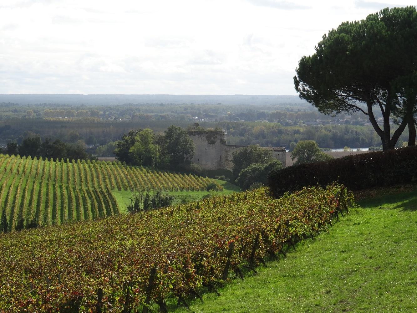 Vue sur la vallée de la Garonne depuis les coteaux de Langoiran