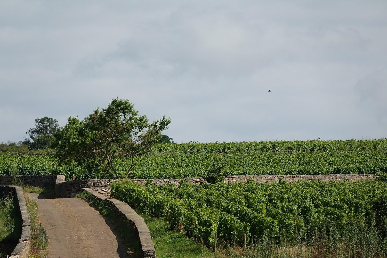 Les climats de Bourgogne au nord de Beaune