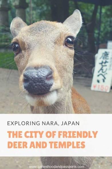 Nara Park Japan - Deer and other things to see in Nara