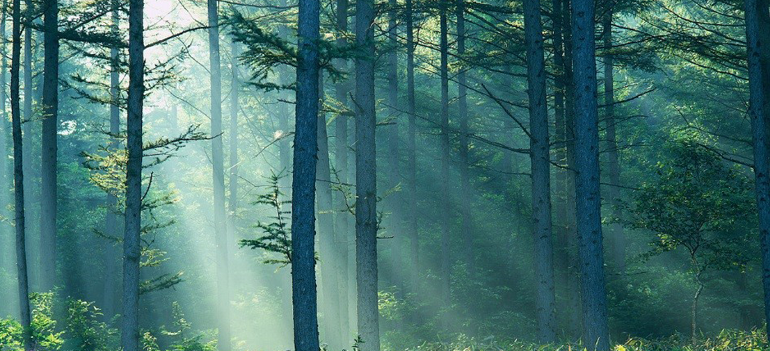 Can't see the forest for the trees