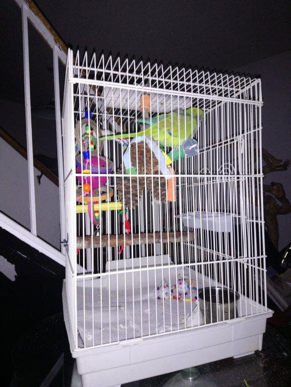 October 2017 Parenting Parrots
