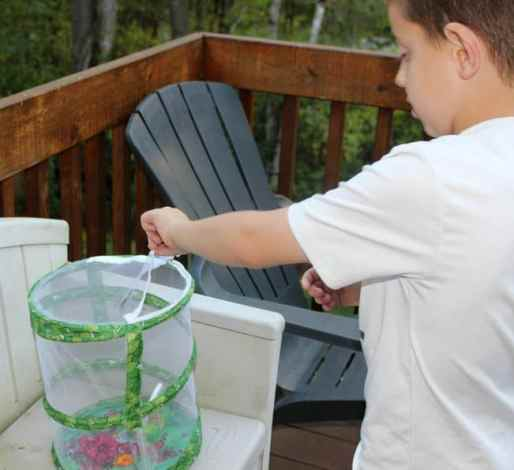 Butterfly-Release | Parenting Healthy