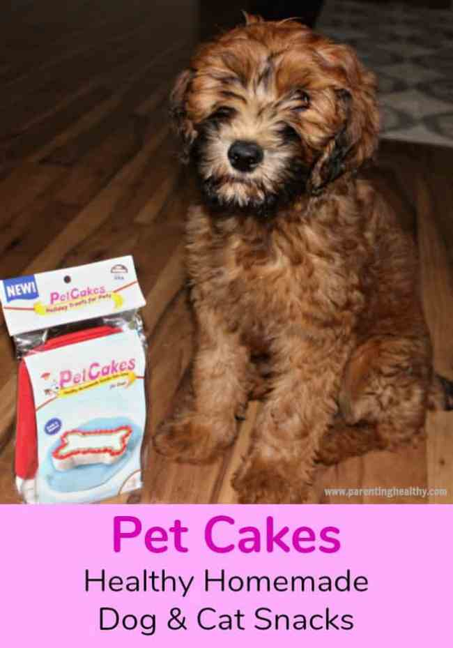 Homemade Dog and Cat Treats From PetCakes