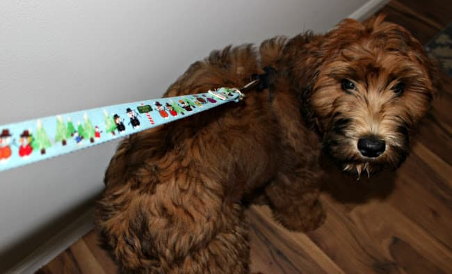 Holiday Leashes and Collars for Dogs