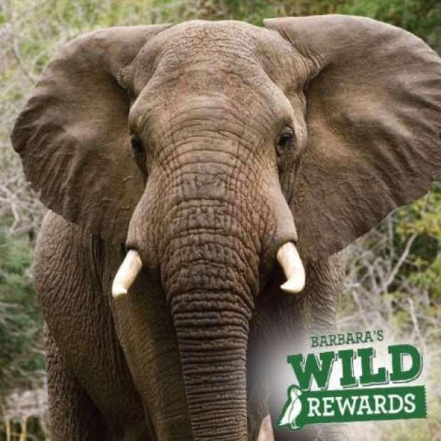 wild-rewards-elephant