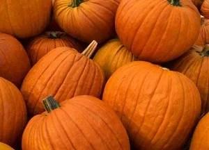 pumpkins-300x216