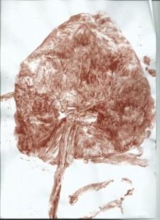 empreinte placenta