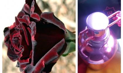 Intense Roses Musk