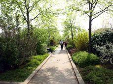 Promenade Plantée. Vzrostlé stromy, nejen keře a květiny.