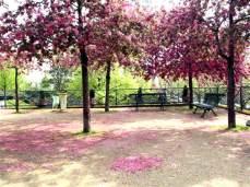 Promenade Plantée. Sakurový hájek.