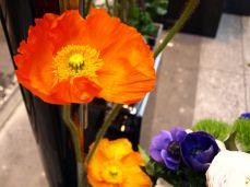 Viaduc des Arts. Nikdy jsem tak krásné květy neviděla.