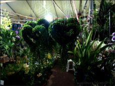 orchid_market_krabi_romana_granatova (23)