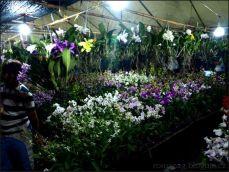 orchid_market_krabi_romana_granatova (25)