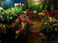 orchid_market_krabi_romana_granatova (26)