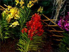 orchid_market_krabi_romana_granatova (36)