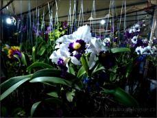 orchid_market_krabi_romana_granatova (39)