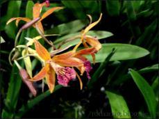 orchid_market_krabi_romana_granatova (47)