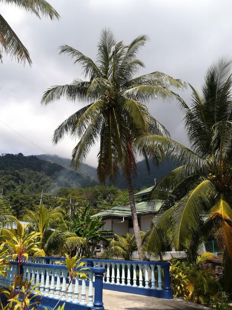 palmier arbre malaisie