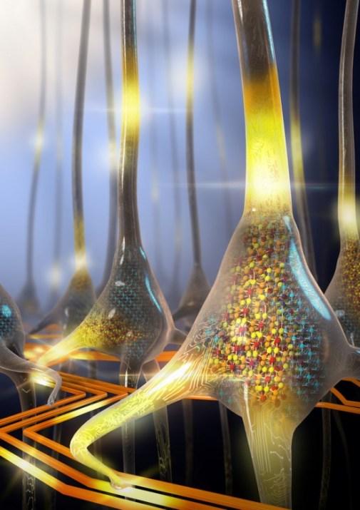 neuromorphic photo