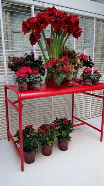 Rouge tout Rouge (4)