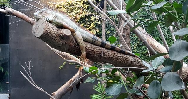 Petit déjeuner avec les girafes au Parc zoologique de Paris (15)