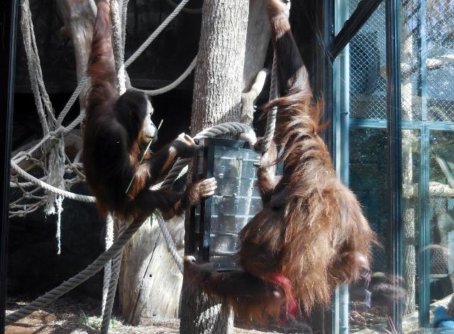 La Ménagerie Le Zoo du Jardin des Plantes (13)
