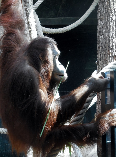 La Ménagerie Le Zoo du Jardin des Plantes (14)
