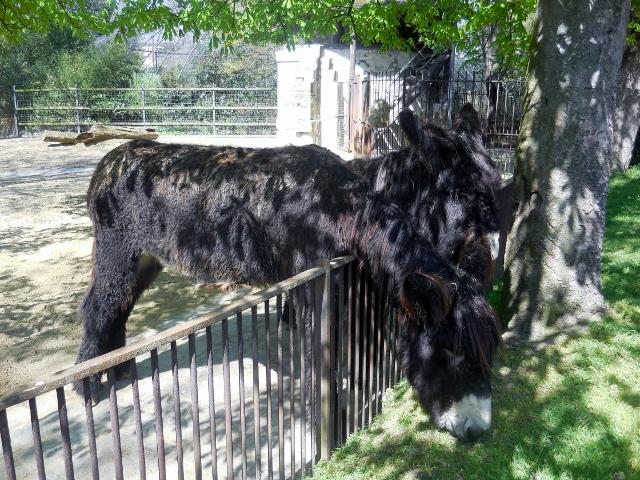 La Ménagerie Le Zoo du Jardin des Plantes (16)