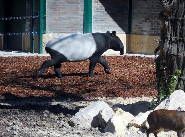 La Ménagerie Le Zoo du Jardin des Plantes (5)