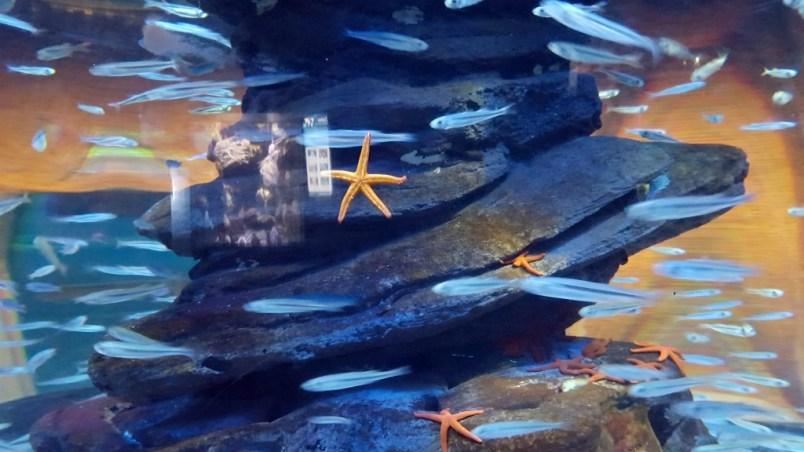 petit service de rencontres de poissons
