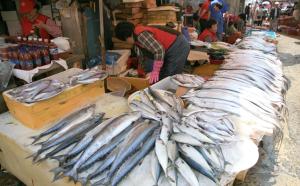 Korea-Tongyeong-Jungang_Live_Fish_Market-03-(1)