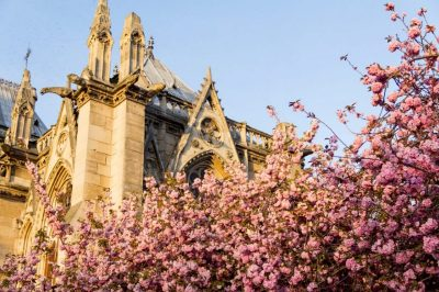 Notre Dame Cathedral shrouded in apple blossoms. Image: Bobo Boom/Creative Commons