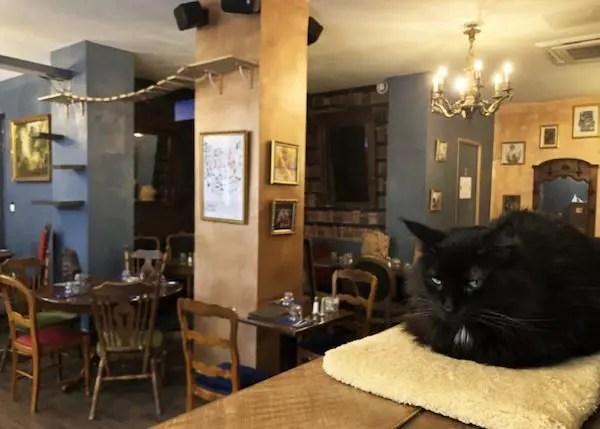 cafe des chats, rue sedaine, paris