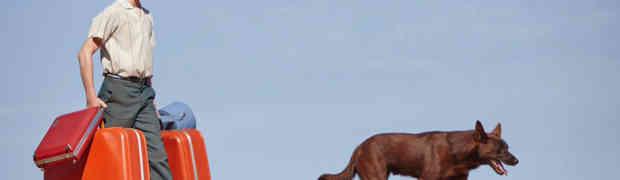 'Red Dog: True Blue': Film Review | Sundance 2017