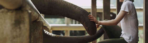 'Love & Bananas: An Elephant Story': Film Review