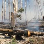Опожарени дървета