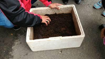蚯蚓養殖箱 - 戶外教學~環境教育場域