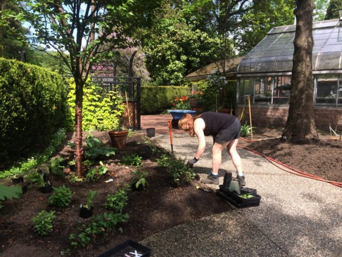 Planting the shady side of the garden