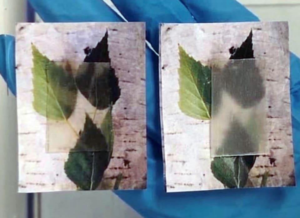 transparent wood composites