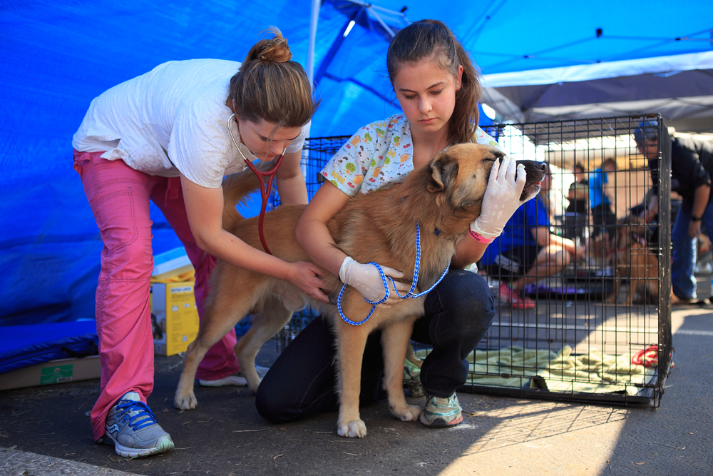 Austin Pets Alive shelter employees checking in a dog from Hurricane Harvey. Photo by Dustin Safranek.